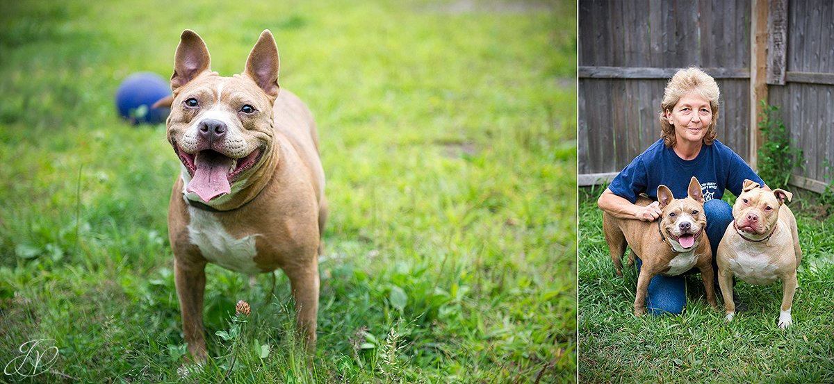 animal rescue, albany pet portrait photographer