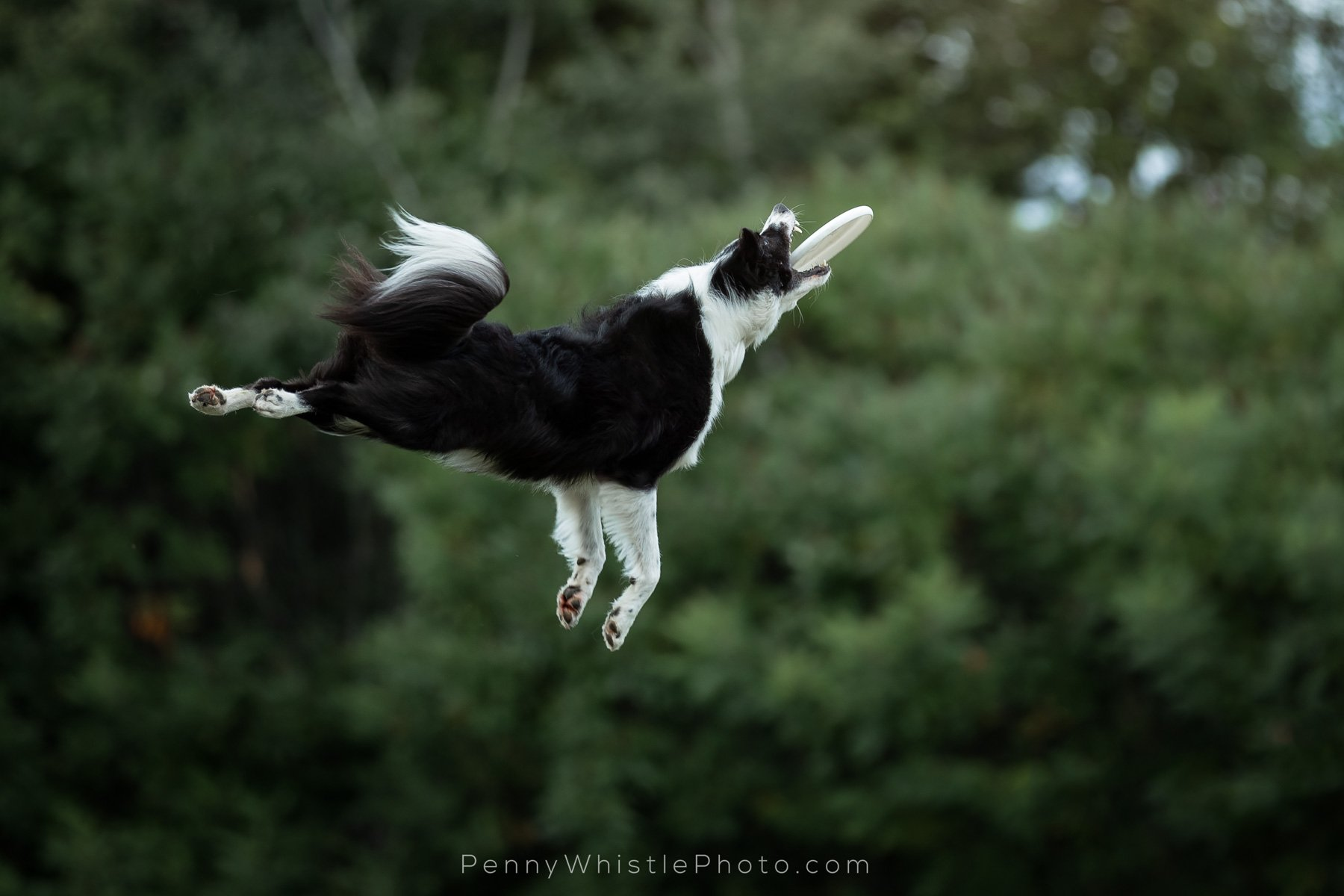 Dog Action Photography Miss dig | alpena power company. dog action photography